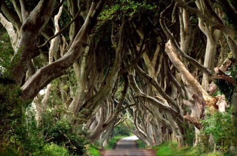 Carretera de arboles, Dark Hedges,Irlanda
