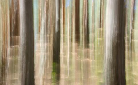 Foto abstracta de arboles desenfocados