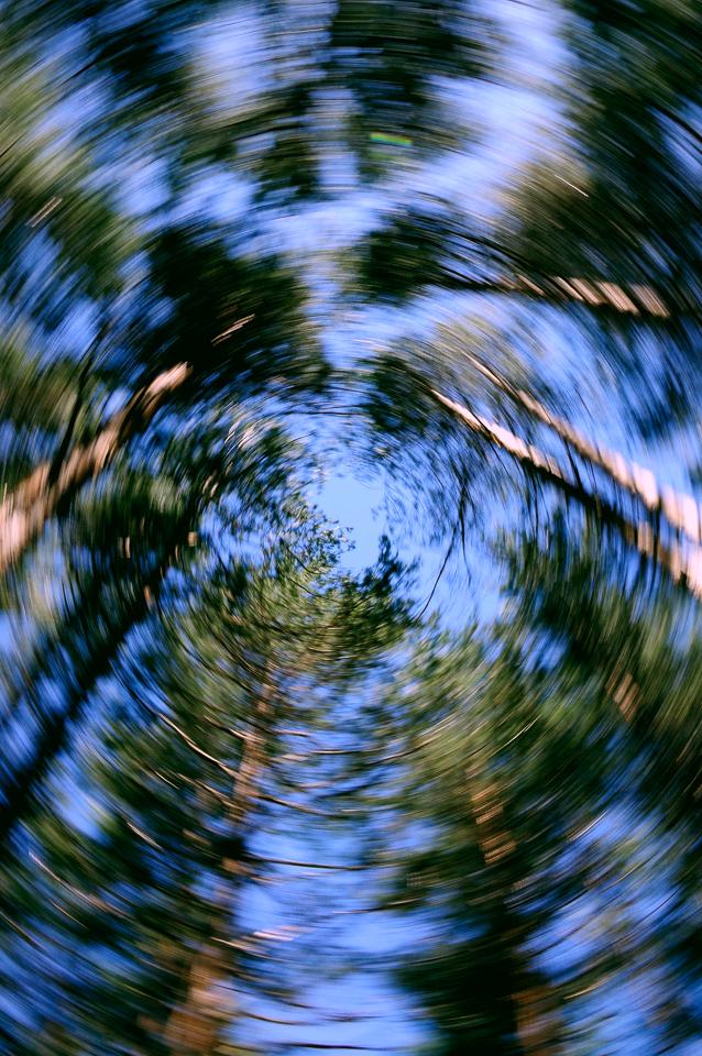 Foto abstracta de arboles desenfocados, movimiento en circulo