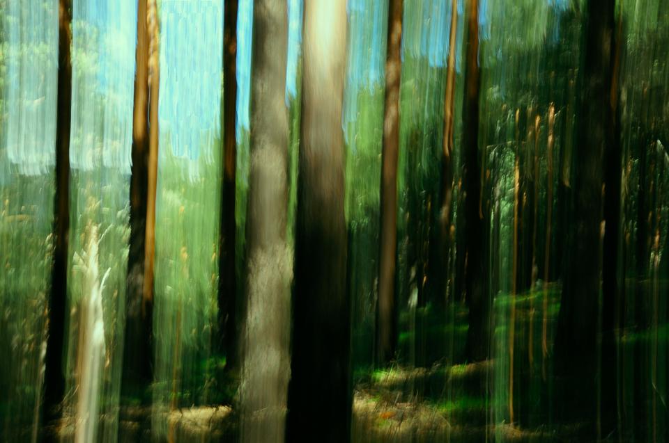 Foto abstracta de arboles desenfocados, movimiento vertical