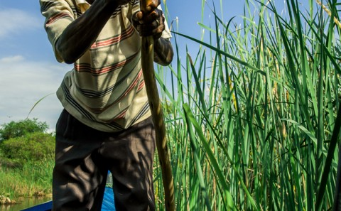 hombre rema su barca entre los manglares, etiopia