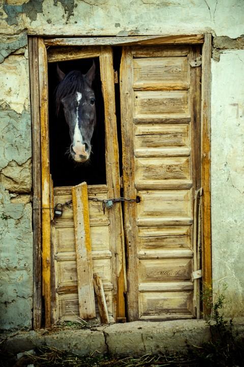 Caballo negro en establo, reserva Dana, Jordania