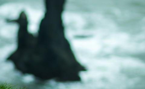 Frailecillo (Puffin) en playa de Vik