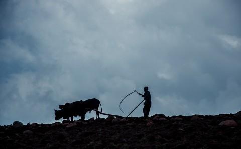 Hombre en Etiopía arando la tierra con ganado