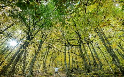 Bosque de Hayedo de la Pedrosa , Segovia
