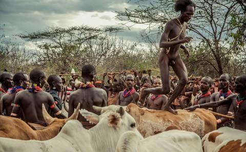Salto del toro de la tribu Hammer, ceremonia Bull Jumping en Etiopía