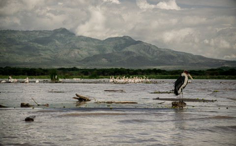 Pelícanos en lago de Bahir dar, Etiopía