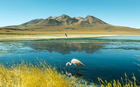Laguna azul en el altiplano Boliviano, Bolivia